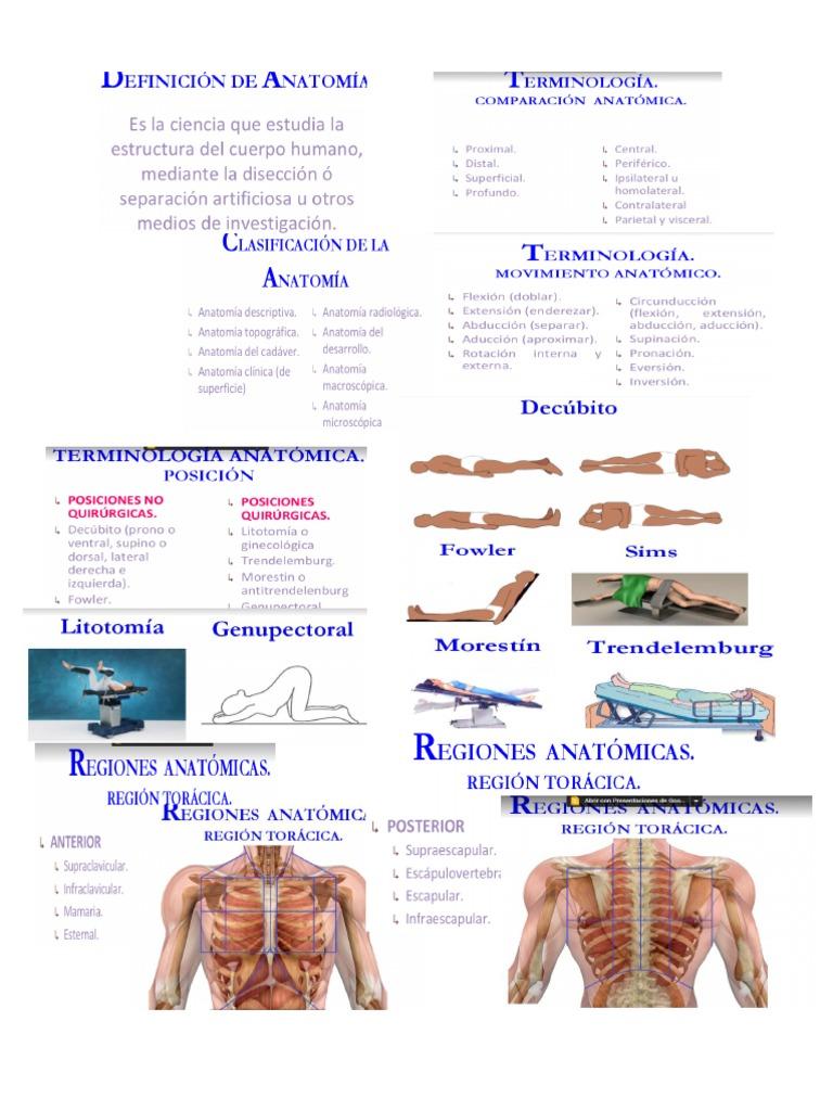 Lujoso Anatomía Definición Profunda Ornamento - Imágenes de Anatomía ...
