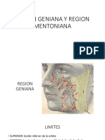 Region Geniana y Region Mentoniana