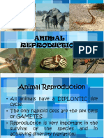 49668462-BIO-3-Animal-Reproduction.ppt