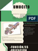 Power Neumocito 1