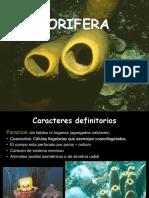 1 Porifera