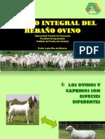 Manejo Integral Del Rebaño Ovino_2011