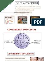 Especie de Clastrodium Diapos