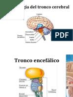 sindromesdeltroncocerebral
