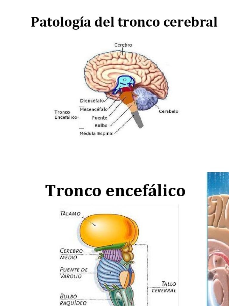 Bonito Anatomía Y Fisiología Studyblue Viñeta - Imágenes de Anatomía ...