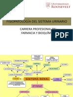 1.Fisiopatología Del Sistema Urinario
