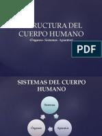 Clase Nociones Basicas y Odontodiagrama Cursos (1)
