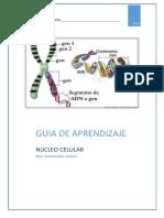 Guia de Aprendizaje Nucleo Celular - Copia