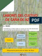 Labores Del Cultivo de Caña de Azúcar