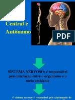Sistema Nervosoimagem2015FINALIZADOenf 1 1