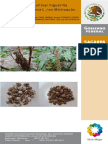Guía para cultivar higuerilla en Michoacán.pdf