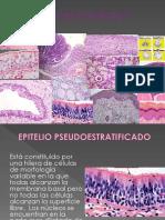 02 Tejido Epitelial Glandular