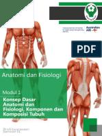 anatomi.pdf