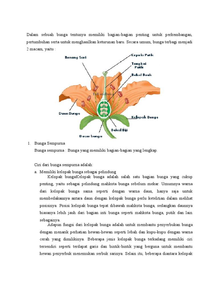 Gambar Bagian Bunga Dan Cara Penyerbukannya Berbagai Bagian Penting