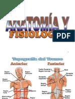 1. Anatomia Basica