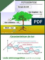 Fotossíntese I