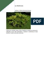 Possíveis Plantas Medicinais