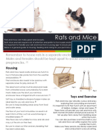 Rats and Mice