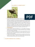 animales en peligro de extincion - Peru