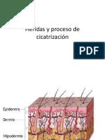 Clase 2 Heridas y Cicatrización