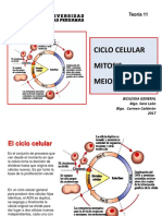 Bio Gen Teoria 11 2017 Ciclo Celular