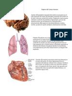 Órganos Del Cuerpo Humano
