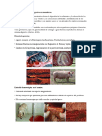 Anatomia Patologica (1)