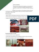 Anatomia Patologica (1)