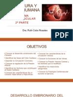 20a Sesión Estructura y Función Sistema Cardiovascular 2a parte