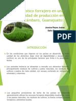 praticultura estrategias.pptx