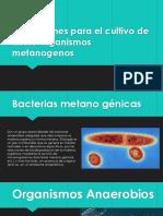 2.5- Bacterias Metanogénicas
