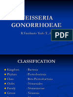 NEISSERIA GONORRHOAE