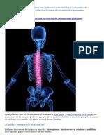 Estabilidad en La Columna Vertebral - Activación de Los Músculos Profundos