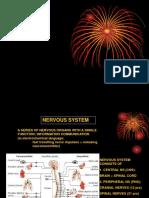 Introduksi Central Nervous System & Peripheral Nervous System
