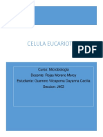 Células eucariota