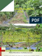 Agroecologia Del Sacha Inchi