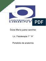 Dulce María juarez sanchez portafolio de anatomia segunda evaluacion.docx