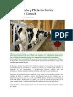 El Organizado y Eficiente Sector Lechero de Canadá