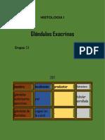 glandulas exocrinas