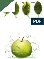 Librosagronomicos.blogspot.com-Los Microelementos en La Nutricion Vegetal