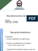 7.- Biomecanica de Rodilla