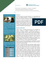 El hábito del coqueo y la conducción profesional.pdf