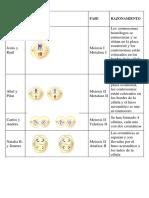 La célula i y L.docx