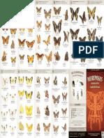 guia_mariposas_df.pdf