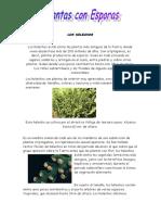 Plantas Con Esporas