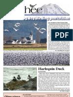 03-2008 Towhee Newsletter Tahoma Audubon Society