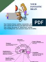 our-brain