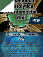 Entamoeba Hystolitica & Entamoeba Coli
