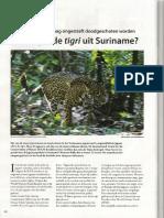 Verdwijnt de Jaguar Uit Suriname - Parbode Nr 49 Mei 2010