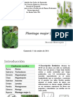 Plantago-major-Llantén.pdf